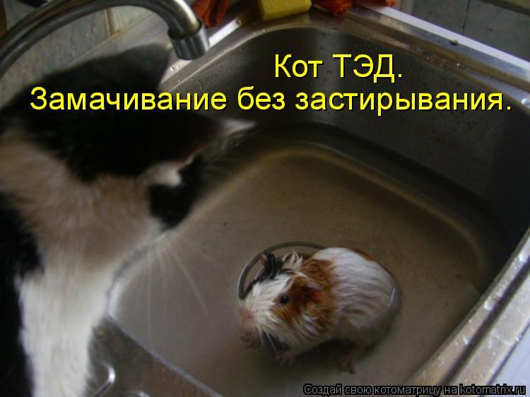 Котоматрица: Кот ТЭД. Замачивание без застирывания.