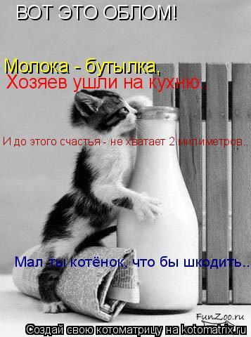 Котоматрица: ВОТ ЭТО ОБЛОМ! Молока - бутылка, Хозяев ушли на кухню.. И до этого счастья - не хватает 2 милиметров.. Мал ты котёнок, что бы шкодить...
