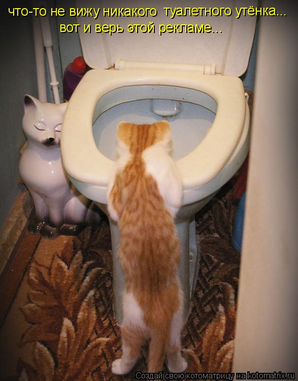 Котоматрица: что-то не вижу никакого туалетного утёнка... вот и верь этой рекламе...