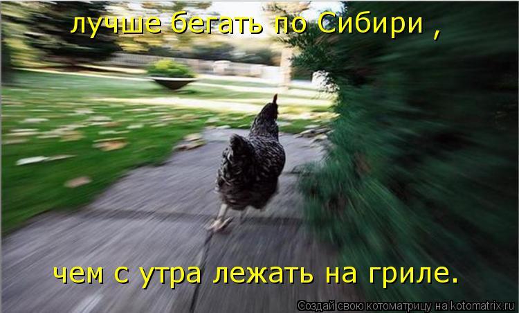 Котоматрица: лучше бегать по Сибири чем с утра лежать на гриле. ,