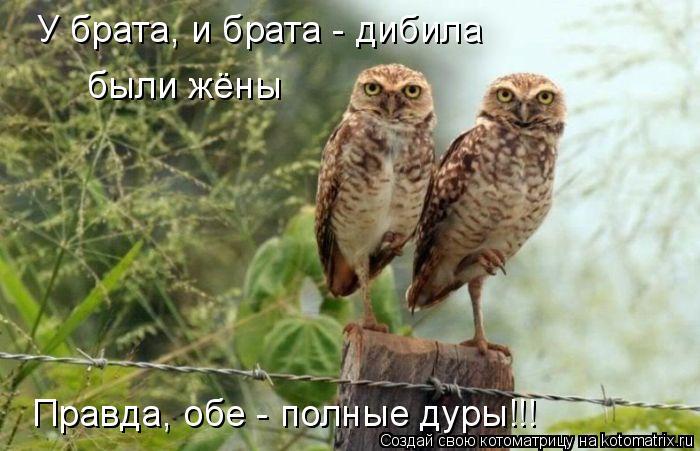 Котоматрица: У брата, и брата - дибила были жёны Правда, обе - полные дуры!!!