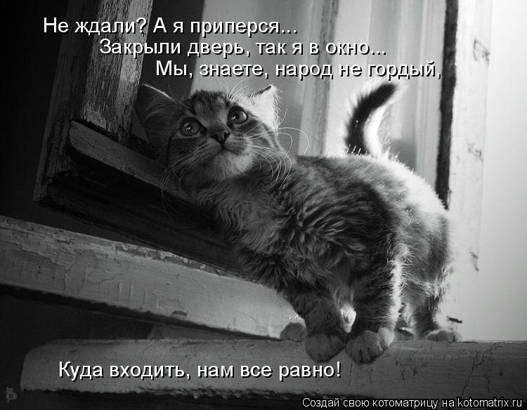 Котоматрица: Не ждали? А я приперся... Закрыли дверь, так я в окно...  Мы, знаете, народ не гордый,  Куда входить, нам все равно!
