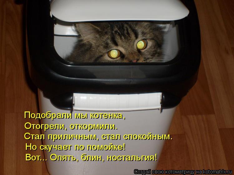 Котоматрица: Стал приличным, стал спокойным.  Подобрали мы котенка,  Отогрели, откормили.  Но скучает по помойке!  Вот... Опять, блин, ностальгия!