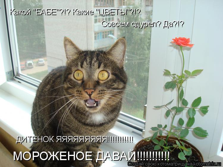 """Котоматрица: Какой """"БАБЕ""""?!? Какие """"ЦВЕТЫ""""?!? Совсем сдурел? Да?!? ДИТЕНОК ЯЯЯЯЯЯЯЯЯ!!!!!!!!!!! МОРОЖЕНОЕ ДАВАЙ!!!!!!!!!!!"""