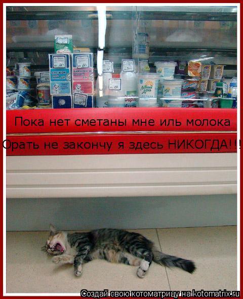 Котоматрица: Пока нет сметаны мне иль молока Орать не закончу я здесь НИКОГДА!!!