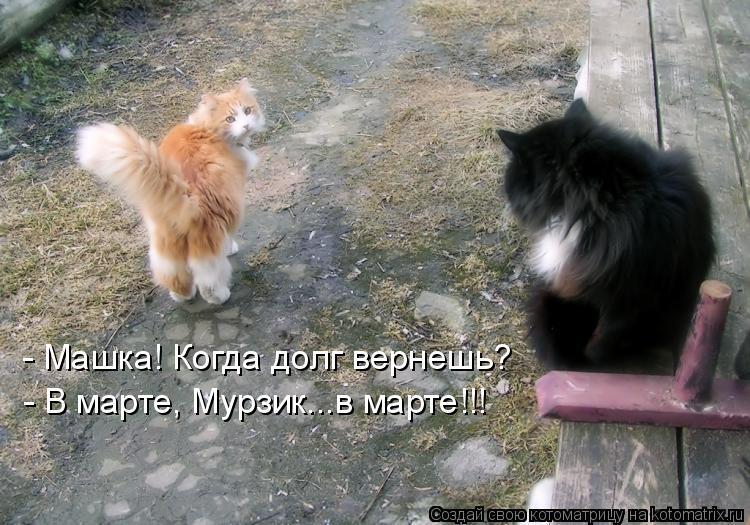 Котоматрица: - Машка! Когда долг вернешь? - В марте, Мурзик...в марте!!!