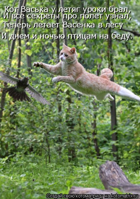 Котоматрица: Кот Васька у летяг уроки брал, И все секреты про полет узнал, Теперь летает Васенка в лесу И днем и ночью птицам на беду…