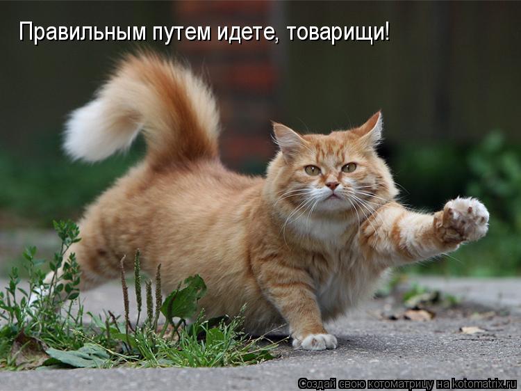 Блок Порошенко решил идти в Раде по пути Партии регионов
