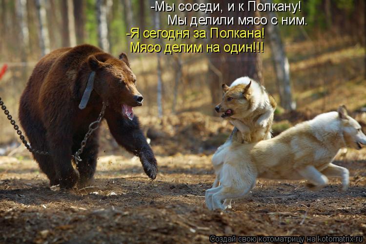Котоматрица: -Мы соседи, и к Полкану!  Мы делили мясо с ним. -Я сегодня за Полкана! Мясо делим на один!!!