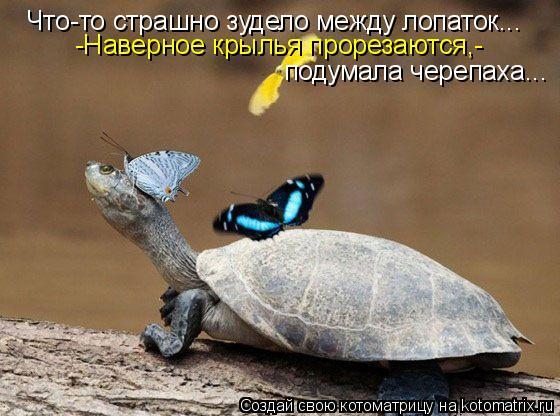 Котоматрица: Что-то страшно зудело между лопаток... -Наверное крылья прорезаются,- подумала черепаха...