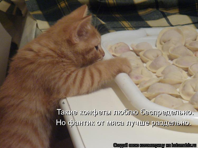Котоматрица: Такие конфеты люблю беспредельно. Но фантик от мяса лучше раздельно.