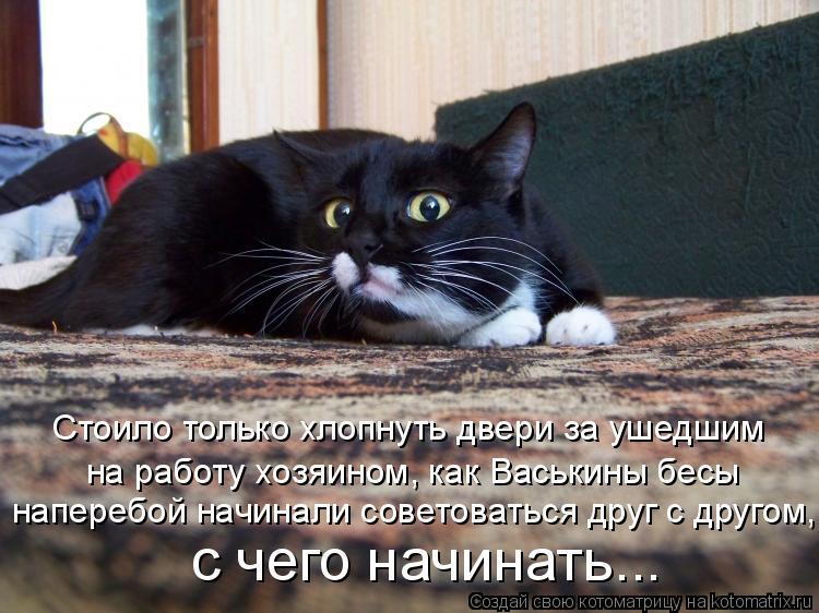 Котоматрица: Стоило только хлопнуть двери за ушедшим на работу хозяином, как Васькины бесы наперебой начинали советоваться друг с другом, с чего начина