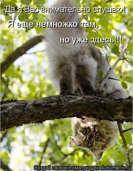 Котоматрица: Да,я Вас внимательно слушаю! Я еще немножко там, но уже здесь!!!