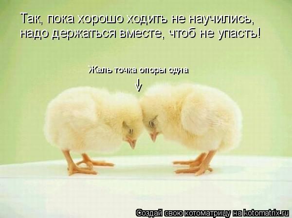 Котоматрица: Так, пока хорошо ходить не научились, надо держаться вместе, чтоб не упасть! Жаль точка опоры одна v l