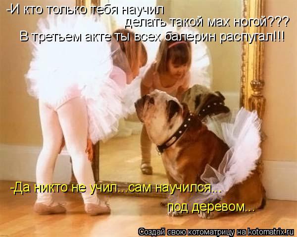 Котоматрица: -Да никто не учил...сам научился... под деревом... -И кто только тебя научил  делать такой мах ногой??? В третьем акте ты всех балерин распугал!!!