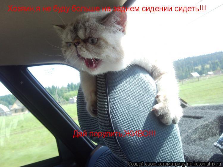 Котоматрица: Хозяин,я не буду больше на заднем сидении сидеть!!! Дай порулить,ЖИВО!!!