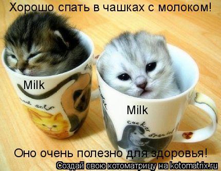 Котоматрица: Хорошо спать в чашках с молоком! Оно очень полезно для здоровья! Milk Milk