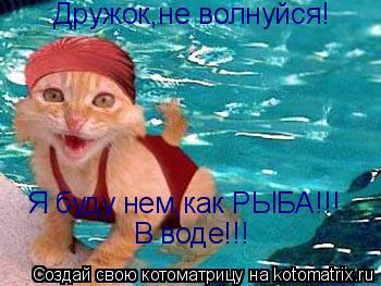 Котоматрица: Дружок,не волнуйся! Я буду нем,как РЫБА!!! В воде!!!