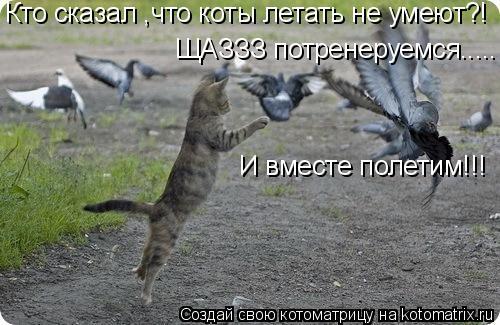 Котоматрица: Кто сказал ,что коты летать не умеют?! ЩАЗЗЗ потренеруемся..... И вместе полетим!!!