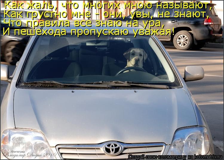 Котоматрица: Как жаль, что многих мною называют, Как грустно мне - они, увы, не знают, Что правила все знаю на ура, И пешехода пропускаю уважая!