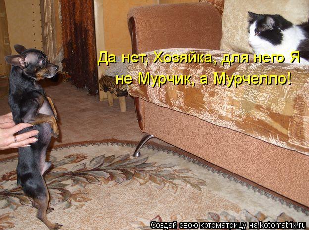 Котоматрица: Да нет, Хозяйка, для него Я  г не Мурчик, а Мурчелло!
