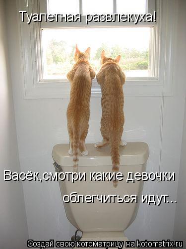 Котоматрица: Туалетная развлекуха! Васёк,смотри какие девочки  облегчиться идут...