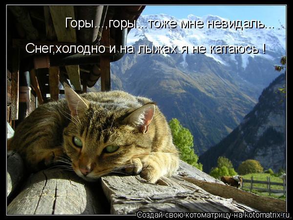 Котоматрица: Горы...,горы...тоже мне невидаль... Снег,холодно и на лыжах я не катаюсь !