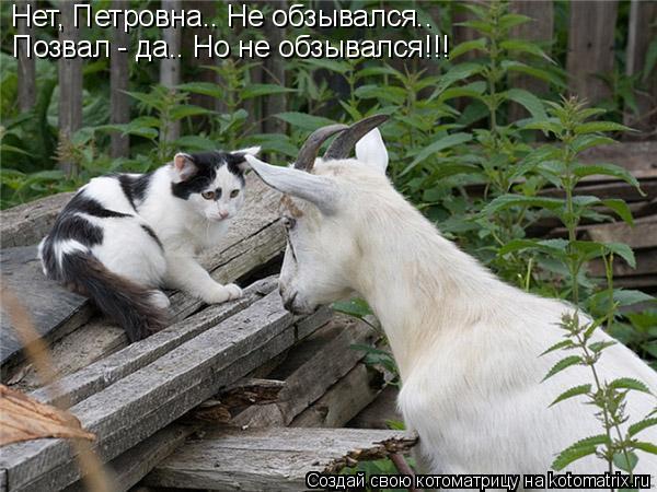 Котоматрица: Нет, Петровна.. Не обзывался..  Позвал - да.. Но не обзывался!!!
