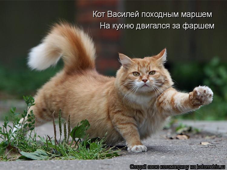 Котоматрица: Кот Василей походным маршем На кухню двигался за фаршем