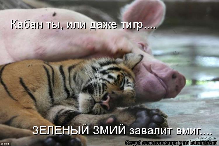 Котоматрица: Кабан ты, или даже тигр.... ЗЕЛЕНЫЙ ЗМИЙ завалит вмиг....