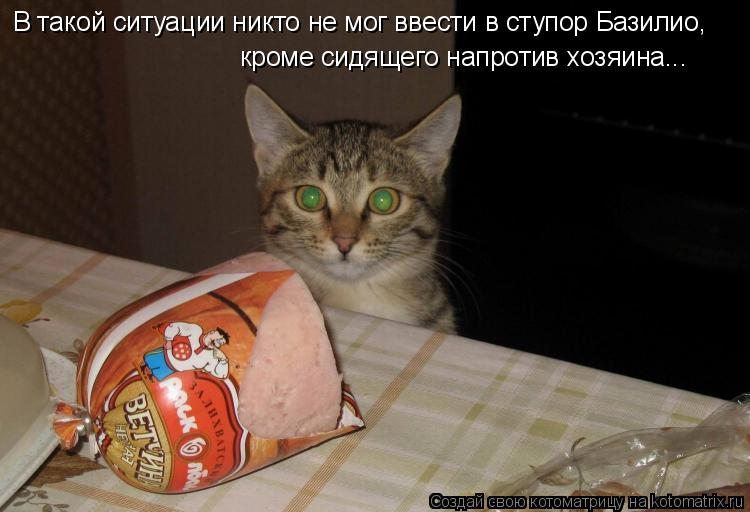 Котоматрица: В такой ситуации никто не мог ввести в ступор Базилио, кроме сидящего напротив хозяина...