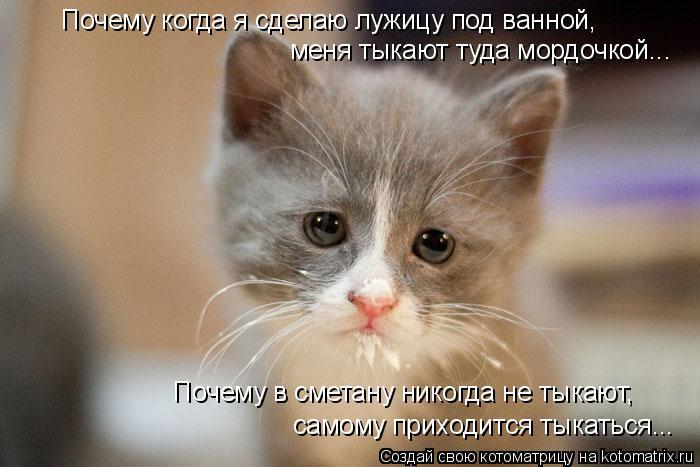Котоматрица: Почему когда я сделаю лужицу под ванной,  меня тыкают туда мордочкой... Почему в сметану никогда не тыкают, самому приходится тыкаться...