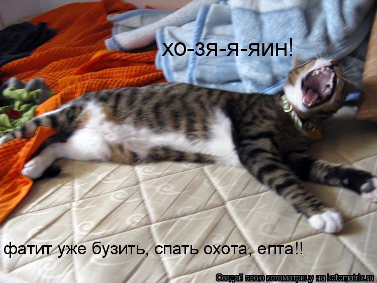 Котоматрица: фатит уже бузить, спать охота, епта!! хо-зя-я-яин!