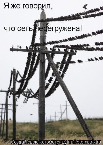 Котоматрица: Я же говорил, что сеть перегружена!