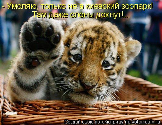 Котоматрица: - Умоляю, только не в киевский зоопарк! Там даже слоны дохнут!...