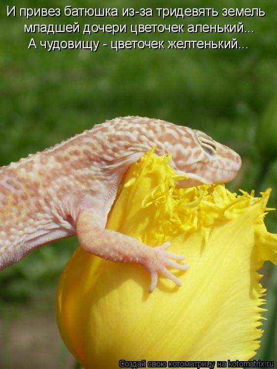 Котоматрица: И привез батюшка из-за тридевять земель младшей дочери цветочек аленький...  А чудовищу - цветочек желтенький...