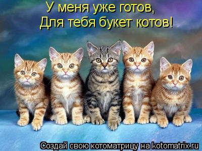 У меня тебе готов букет котов