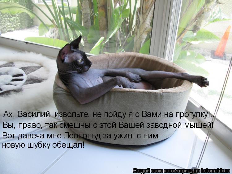 Котоматрица: Ах, Василий, извольте, не пойду я с Вами на прогулку!..  Вы, право, так смешны с этой Вашей заводной мышей!  Вот давеча мне Леопольд за ужин  с ни