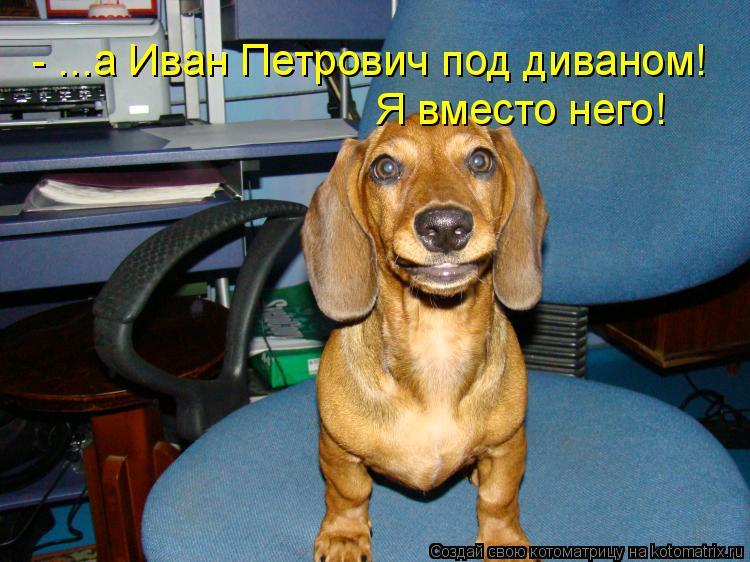Котоматрица: - ...а Иван Петрович под диваном! Я вместо него!