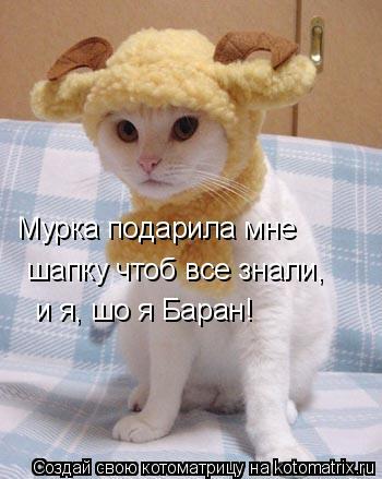 Котоматрица: Мурка подарила мне  шапку чтоб все знали, и я, шо я Баран!