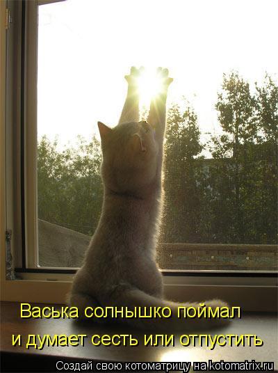 Котоматрица: и думает сесть или отпустить Васька солнышко поймал
