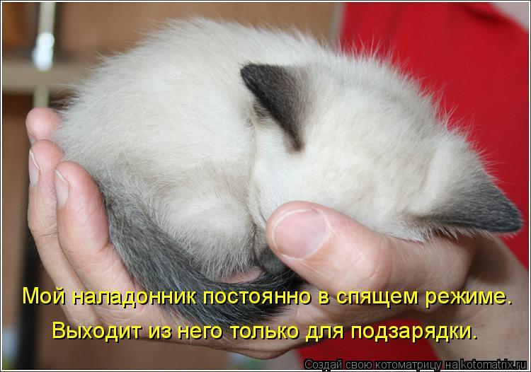 Котоматрица: Мой наладонник постоянно в спящем режиме. Выходит из него только для подзарядки.