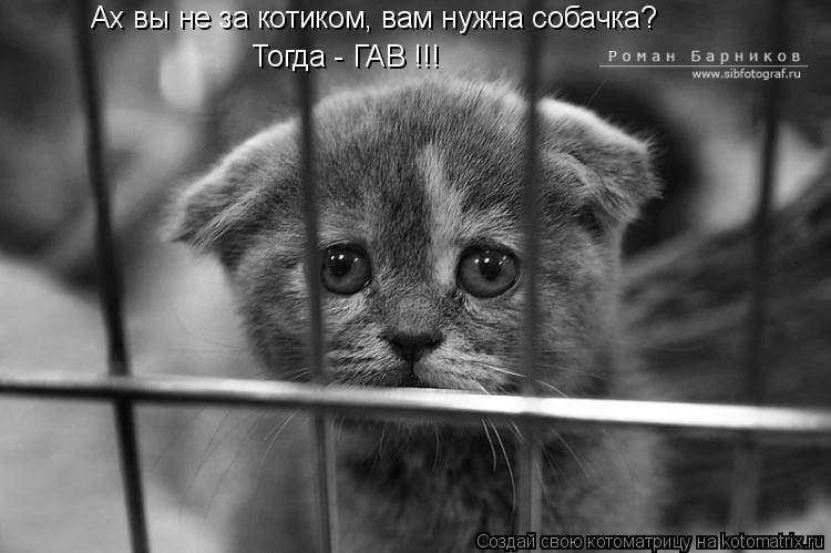 Котоматрица: Ах вы не за котиком, вам нужна собачка? Тогда - ГАВ !!!