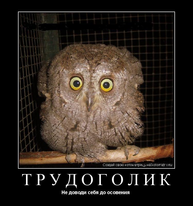 http://kotomatrix.ru/images/lolz/2010/06/14/k.jpg