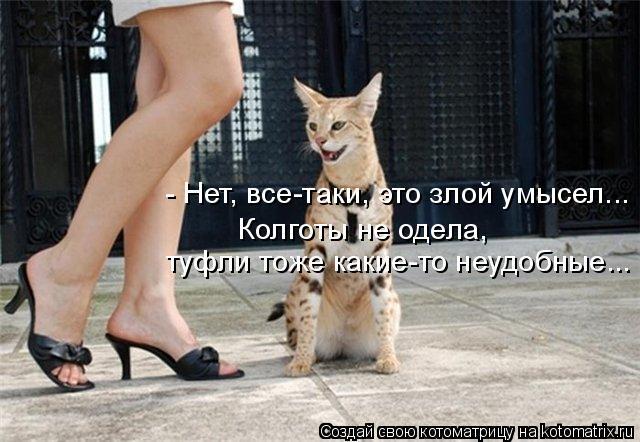 Котоматрица: Колготы не одела,  туфли тоже какие-то неудобные... - Нет, все-таки, это злой умысел...