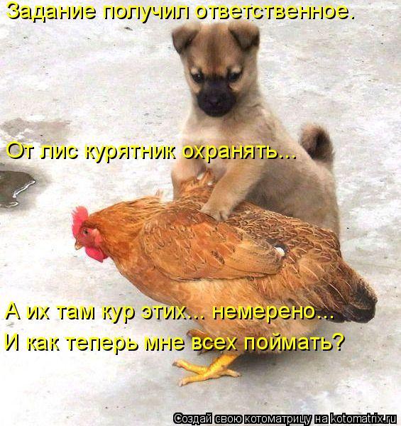 Котоматрица: Задание получил ответственное. И как теперь мне всех поймать? От лис курятник охранять... А их там кур этих... немерено...