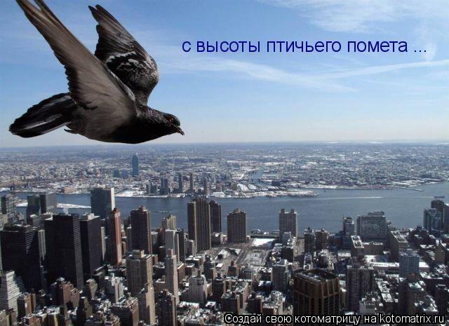 Котоматрица: с высоты птичьего помета ...