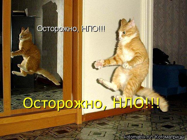 Котоматрица: Осторожно, НЛО!!! Осторожно, НЛО!!!