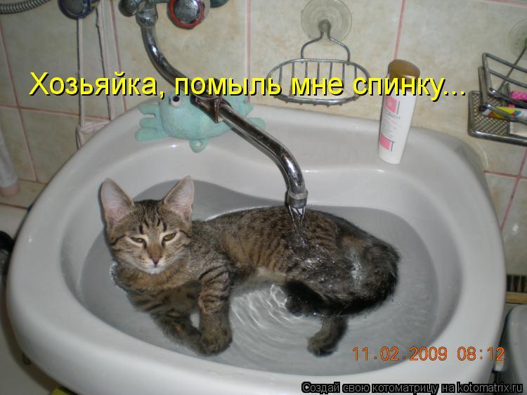 Котоматрица: Хозьяйка, помыль мне спинку...