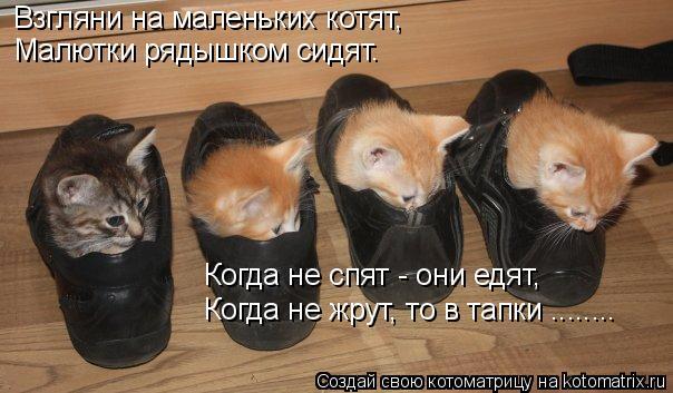 Котоматрица: Взгляни на маленьких котят, Малютки рядышком сидят. Когда не спят - они едят, Когда не жрут, то в тапки ........